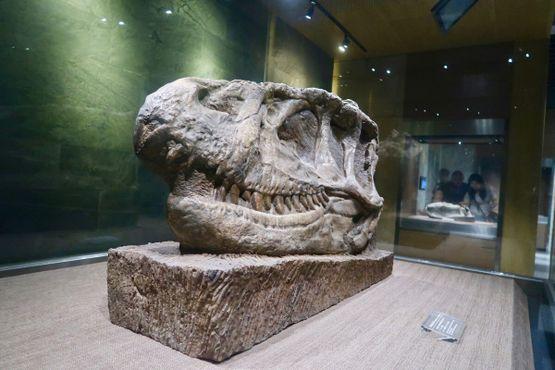 Череп динозавра, найденный на месте раскопок