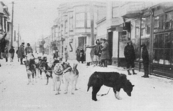 Балто и ездовые собаки из его упряжки прибыли в Ном с сывороткой