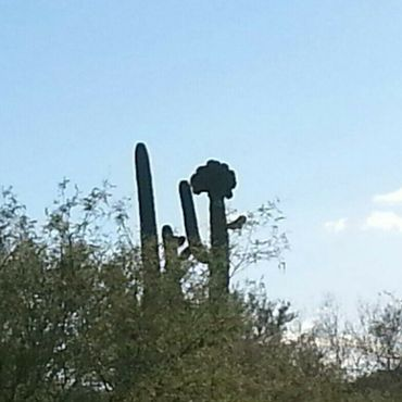 Кактус сагуаро на западной стороне I-19. По-моему, очень похож на Лизу Симпсон!