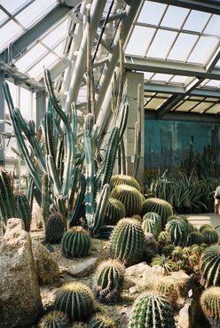 В оранжерее выращиваются растения из разных климатических зон