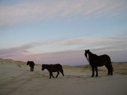 Островные лошади