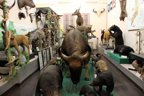 Зал млекопитающих