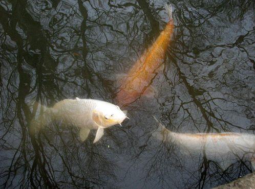 Пруд с рыбками