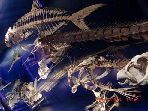 Обилие рыбьих костей