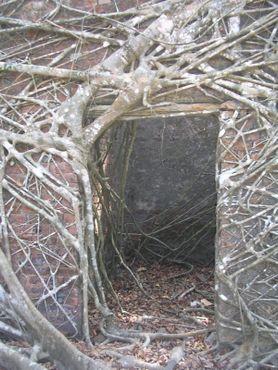 Дверной проём в заброшенном доме, медленно поглощаемом корнями фикуса