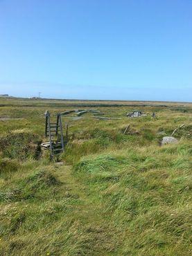 Мостик в болоте помогает добраться до колодца