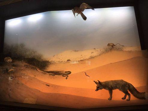 Стейнхардтский музей естествознания