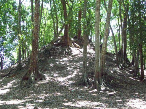Под этим холмом, вероятно, находятся постройки майя