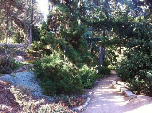 Ботанический сад Милдреда Матиаса
