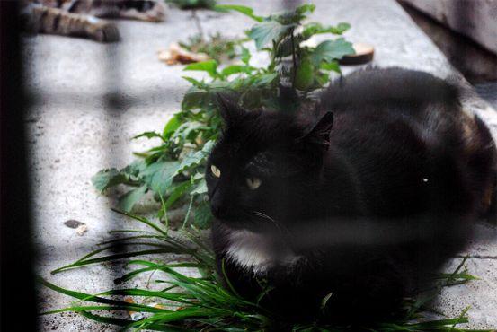 Кошка отдыхает около ворот