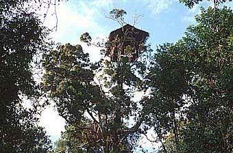 Дом короваина дереве, Папуа