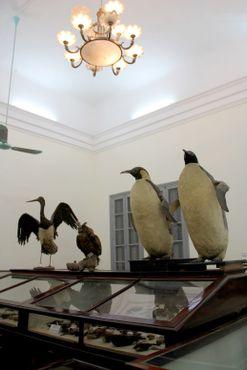 Зал птиц