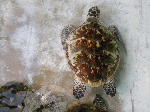 Инкубаторий морских черепах