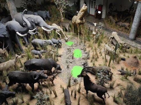 Музей естественной истории в Мапуто