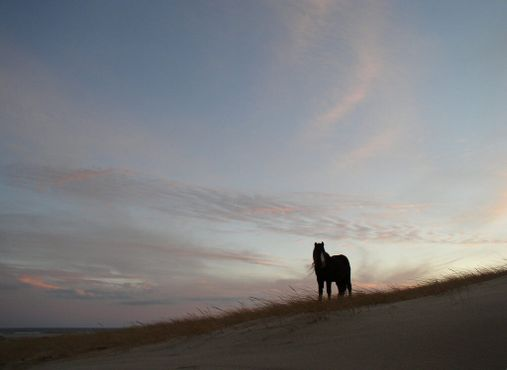Лошадь острова Сейбл на закате