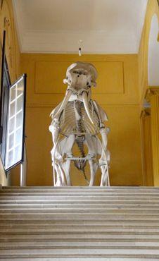 У входа в музей посетителей встречает полный скелет слона