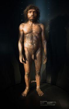 Модель родезийского человека, сделанная Элизабет Дэйнс