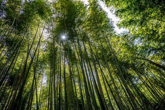 Лучи пробиваются сквозь стволы деревьев