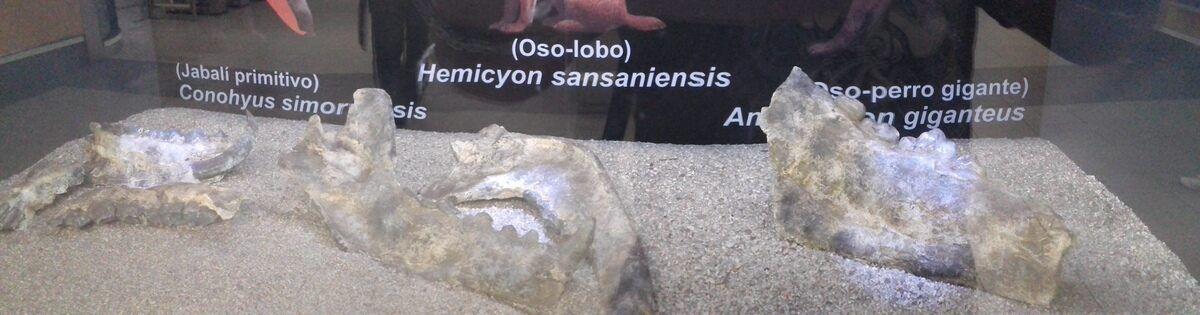 Копии окаменелостей