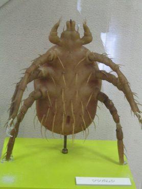 Музей паразитологии в Мэгуро