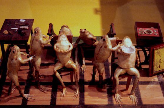 Музей лягушки