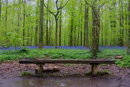 Скамейка в синем лесу