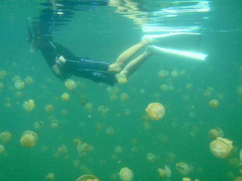 Плавание с медузами