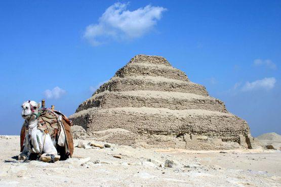 Пирамида Джосера (4,700 лет) и верблюд (возраст неизвестен)