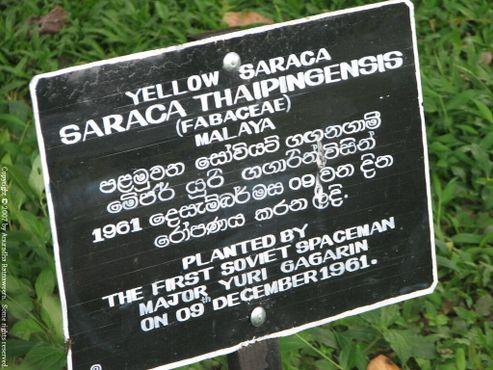 Табличка к дереву Ю. Гагарина