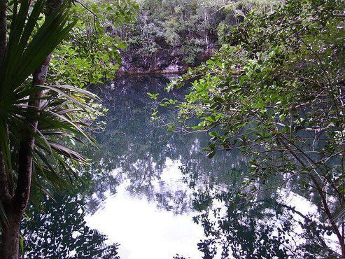 Джунгли, окружающие сенот