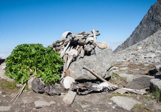 Человеческие скелеты на Озере Роопкунд