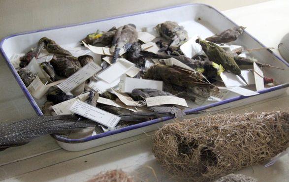 Поднос с тушками птиц, служащими наглядным пособием