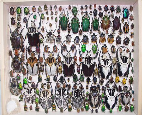 Всемирный музей насекомых и природных чудес