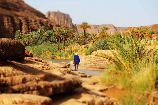 Оазис в пустыне вокруг Джанета