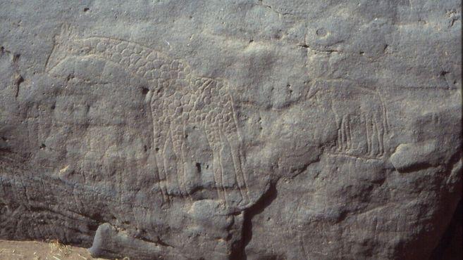 Небольшой жираф и другие изображения животных в Дабусе