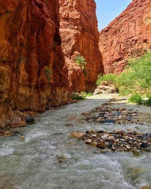 Растительность в каньоне Зарка-Маин