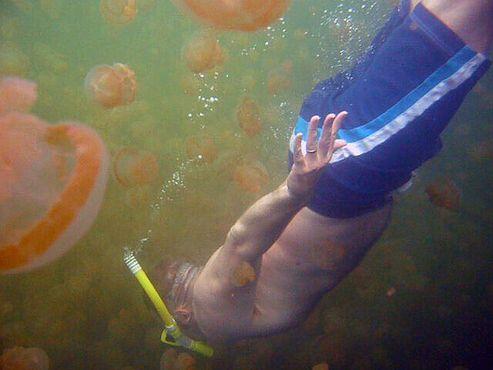 Погружение к медузам