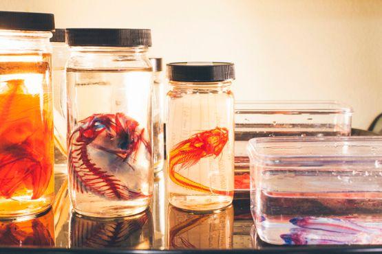 Ихтиологическая коллекция
