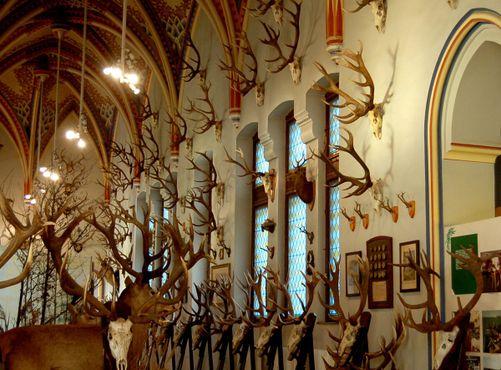 Коллекция рогов