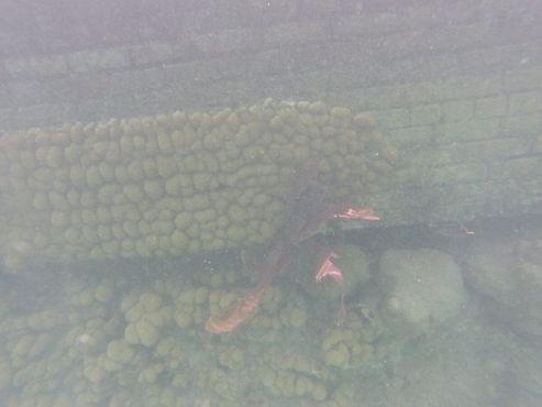 Красивый коралл на стене рва
