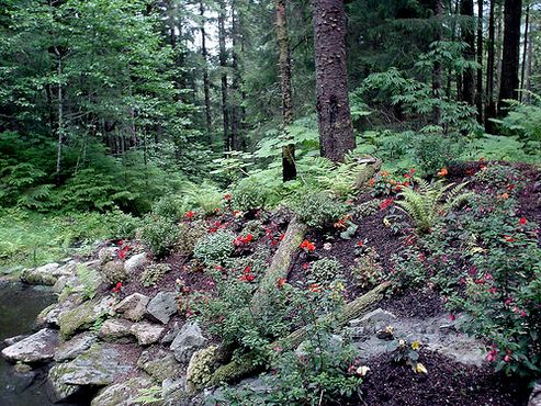 Национальный лес Тонгасс, часть экскурсии по Глэсиер-Гарденс