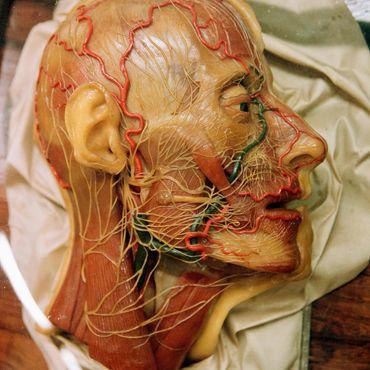 Анатомическая коллекция «Ла-Спекола»