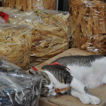 Чей-то кот отдыхает среди товаров