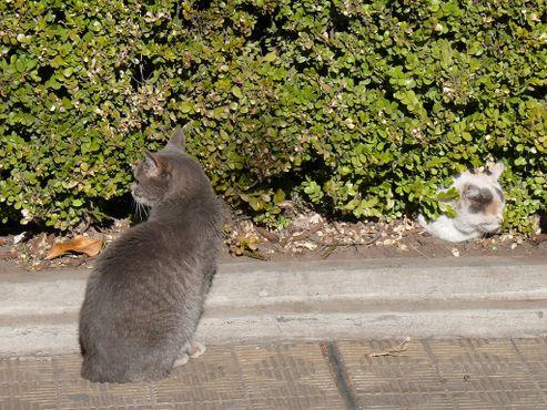 Коты на кладбище Реколета