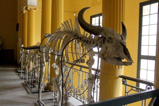 Скелеты в коридоре