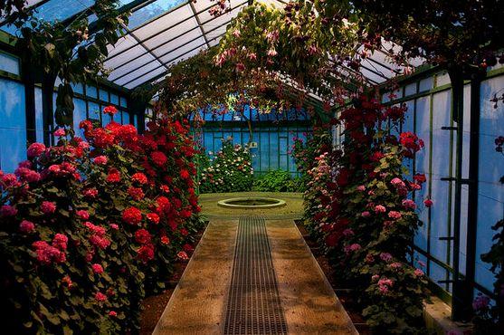 Цветы внутри садового комплекса