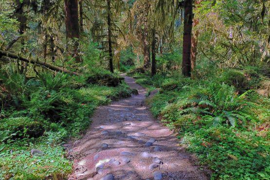 Идущая вверх тропа вдоль реки Хох, национальный парк «Олимпик»