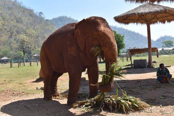 Отдыхающий слон в природном парке