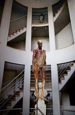 Экспонат Музея медицины