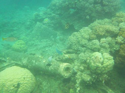 Ствол пушки, поросшей кораллами